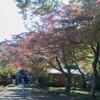 紅葉の色を綺麗に撮るコツ