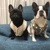 共働き夫婦の愛犬フレブル日記・2021年8月度