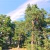 フィンランドあるある:第二の家はセルフビルド
