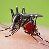 O型は蚊に刺され易い?
