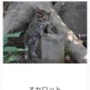 珍しい動物がもりだくさんの、よこはま動物園ズーラシアに行ってきました。