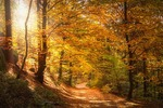 秋の京都で混雑を避けて、紅葉をゆっくり楽しめる人気穴場スポットベスト10