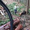 続、木の搬出