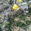 春がすぐそこに