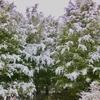 私にとっての雪の結晶