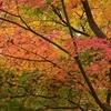 Z 50 京都、東福寺の紅葉を撮影②