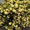 2020-04-17 花は強し