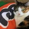 【愛猫日記】毎日アンヌさん#34