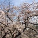 お散歩Diary