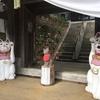 雲林寺(ネコ寺)|忠猫伝説が残る猫好きにはたまらない猫の寺