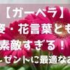 【ガーベラ】容姿・花言葉ともに素敵すぎる! ~プレゼントに最適なお花~