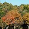 久々の谷戸山公園