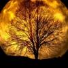 獅子座の新月の願いの大きさは?