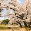 慌ただしい春、20日ぶりの休みっ!