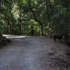奈良公園の裏山を歩く