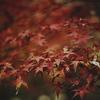 紅葉ももう終わりかな