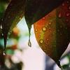 雨上がりのある朝
