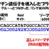 改めて、DNAの読み方をめちゃくちゃ分かりやすく説明するよ