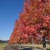 秋も深まり、11月に入って思うこと......(・_・)