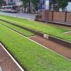 鹿児島市の都電の軌道は緑化されています
