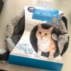 市販の猫ちゃんグッズ@テメキュラ、CA