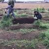 【オルかな農園報告㉒~春の植え付け開始!じゃがいも、にんじん、小かぶを植えました~】