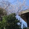 春の気配とゲルカヤノ