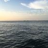 2016/09/10 平磯海釣り公園 釣果[家族サービス釣果]