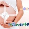妊娠記録☆19週の妊婦検診