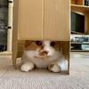 段ボールを第三形態へ移行!るるちゃんのおもちゃタイムの隠れ家に。