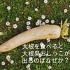 【研究エッセイ】大根を食べたら大根臭おしっこが出るのはなぜか?