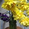 水仙など切り花