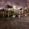 桜が散った後も美しい『日中友好庭園』の花筏。