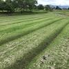 学外畑の様子&学内畑の草刈り