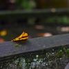 この秋から冬にかけて撮った紅葉の写真をあげておこうと思った。
