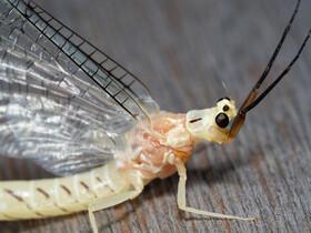 宮丘公園で昆虫と変形菌(粘菌)撮影