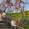 神奈川県松田町で早春を満喫🌸