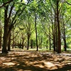 【おとなの自然観察 5つの手順~初心者 前編】おすすめの場所など、自然を楽しむための手順をご紹介