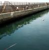 釣場調査 吉良サンライズパーク(宮崎港)