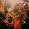季節外れではありますが・・・今年是非行ってほしい紅葉を先取りご紹介!!