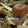 MushRoom.8月のキノコ@会津駒ケ岳