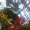 無機物と調和する鎮守の森 〜3倍返しもありの都会のオアシスで紅葉を楽しむ~