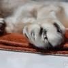 16歳の老猫「シグレ」歩くことが出来なくなった 死の香り