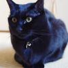 今日の黒猫モモ&白黒猫ナナの動画ー901