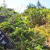 苗場山への登山ルートは祓川コースで。急登と平原のギャップが凄かった