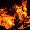 カリフォルニア山火事でエレンとポーシャも避難