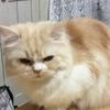 『ミルク、猫年がない事に一言物申す!』の巻