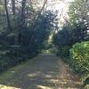 東京旅行三日目(3)。じっくり散策、新宿御苑。菊花壇に擬木、プラタナス並木から大温室まで