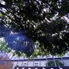 ★真昼の木漏れ日