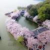 週末無錫鼋頭渚桜撮影ツアーに参加してきました。(3)DJI Mavic2 Proドローンで空撮
